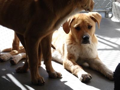 puppy-blog.jpg