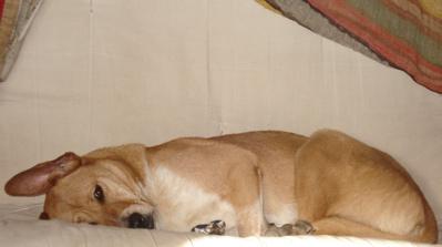 horizontal-dog.jpg
