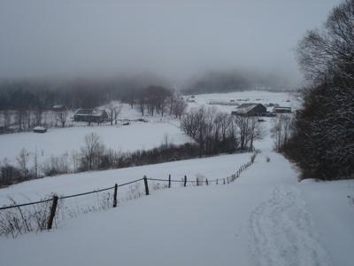 merck-landscape.jpg