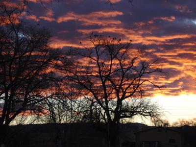 birds-sunrise.jpg