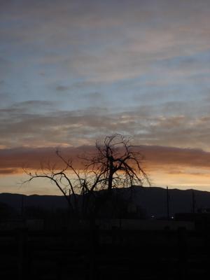 sunrise-vertical.jpg