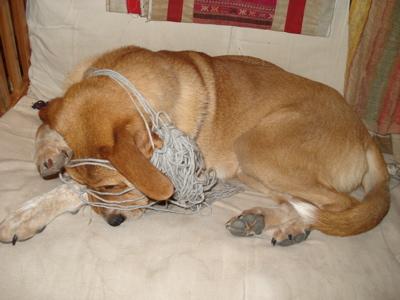 dog-yarn1.jpg