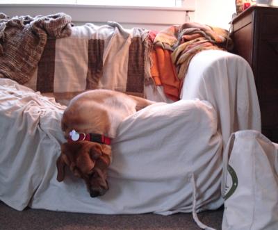 sillydog-couch