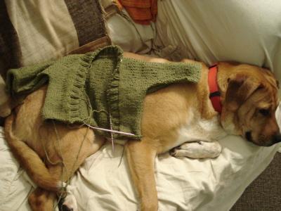 sweaterondog1