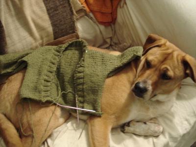 sweaterondog2