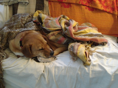 boh-under-blankets