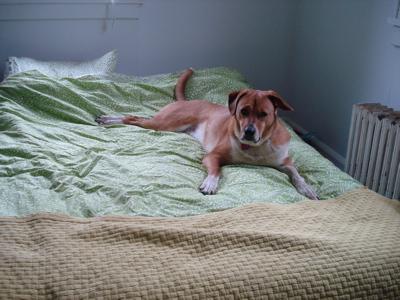 posingdog