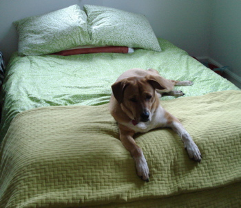 silly-dog-on-bed