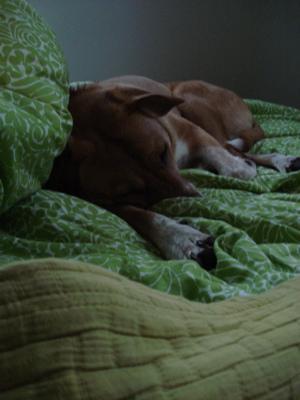 sleepy-boh