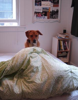 boh comforter