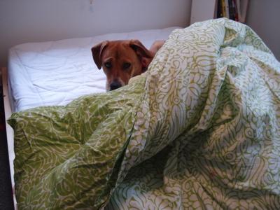 bohhidingcomforter2