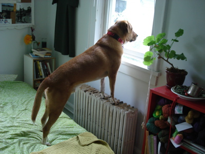 longdogwindow