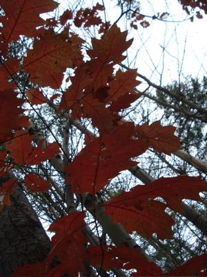leaves six mile creek