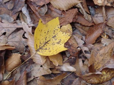 yellow1 six mile creek